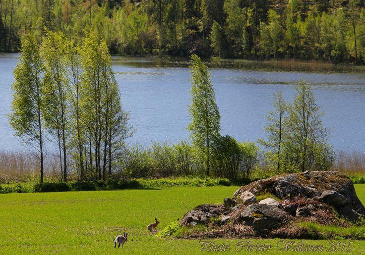 Kesäkuvia Suomesta - www.christervaltanen.fi