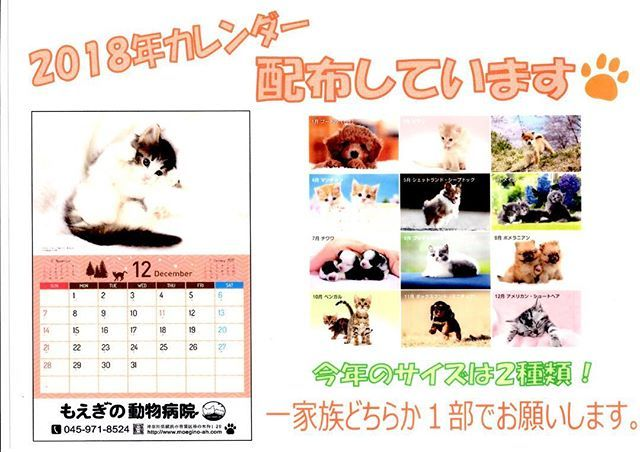 今年も、2018年のカレンダーを受付にて配布しています。 サイズは2種類です。 数に限りがございますので、一家族どちらか一部でお願いします。 皆様、よいお年をお過ごしください。 ☆2018年カレンダーの写真のわんちゃんねこちゃんたち☆ 1月 プードル(犬) 2月 ソマリ(猫) 3月 柴犬(犬) 4月 マンチカン(猫) 5月 シェットランド・シープドッグ(犬) 6月 メイン・クーン(猫) 7月 チワワ(犬) 8月 ブリティッシュ・ショートヘア(猫) 9月 ポメラニアン(犬) 10月 ベンガル(猫) 11月 ミニチュアダックスフンド(犬) 12月 アメリカン・ショートヘア(猫) 毎月、とてもかわいらしいわんちゃんねこちゃんの写真です。 2018年も、素敵な1年になりますように。 #動物病院 #犬 #猫 #いぬ #ねこ #イヌ #ネコ #愛犬 #愛猫 #dog #cat #カレンダー #2018年カレンダー