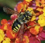 Beautiful British Bees sketching day at WWT Slimbridge near Bristol on 10th July 2015
