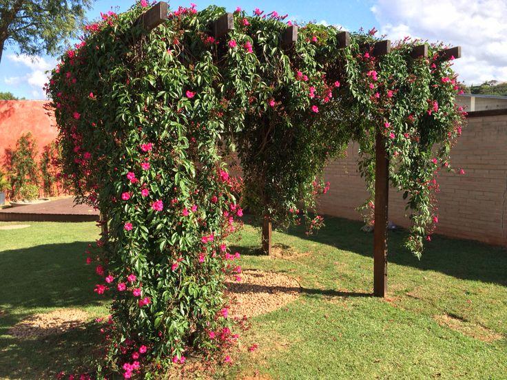 Pergolado maravilhoso com flores exuberantes #ipomeia # trepadeira #flower
