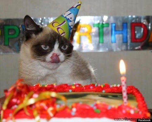 Photo chat mignon anniversaire