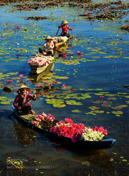 Water lily in Viet Nam by TunNguyn16 beautiful blue green lake long an viet nam water TunNguyn16