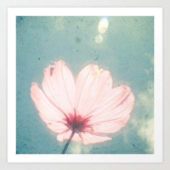 Flower, floral, cosmos flower, light pink...
