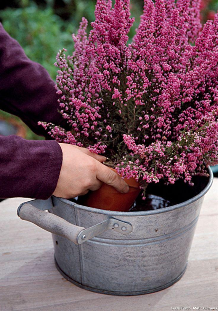 Les 25 meilleurs arrangements d 39 orchid es sur pinterest - Arrosage orchidee en pot ...