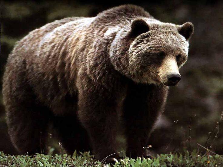 zvieratka z lesa obrazky - Google Search