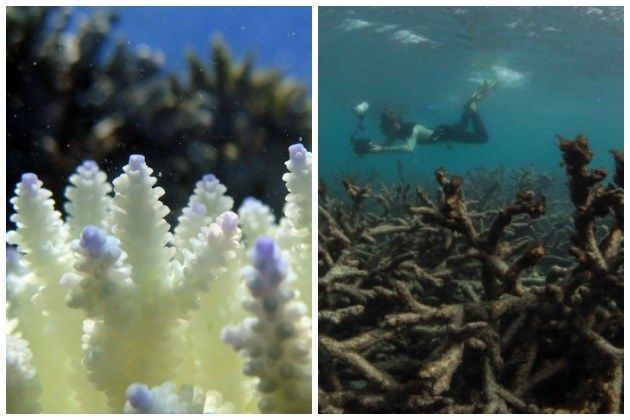 Don't Mention The Coral Bleaching: The Vital Thing Missing From The Great Barrier Reef Report