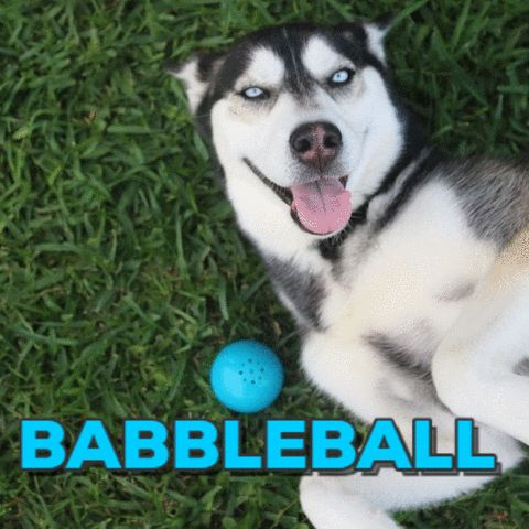 The Babble Balls are interactive toys that talk or make exciting animal sounds when touched.