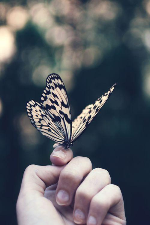 """""""No exato momento em que a lagarta pensou que o mundo se acabava, ele se transformou uma borboleta""""."""