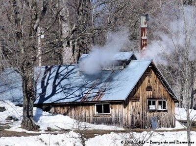 sugar house with steam rising from the boiling maple