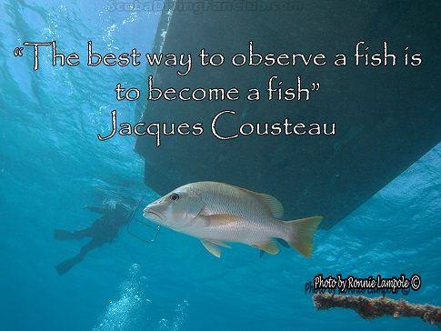 Observe a fish...Jacques Custeau