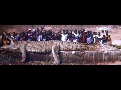 Vídeos engraçados - crocodilo gigante: https://youtu.be/Yr2IsqBA4E4