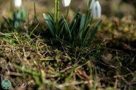 Marzec i kwiecien w ogrodzie.  #praktycznyporadnik #spring #garden