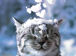 Image result for winter wonderland tumblr