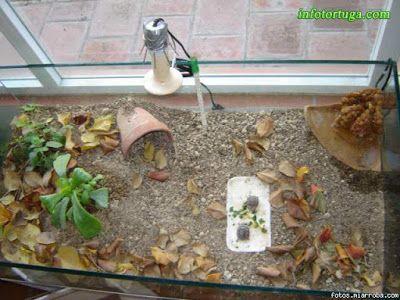 Un zoo en casa - Animales y mascotas: Instalaciones para tortugas terrestres (Testudo)