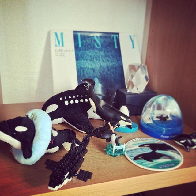シャチのグッズ〜 手前2つが名古屋港で増えた(*^^*) #憧れ #シャチ #orca #aquarium #名古屋港水族館 #鴨川シーワールド #グッズ #ファインダー越しの私の世界 #癒やし #nanoblock #starflyer #エアライングッズ