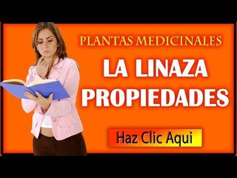 Linaza Propiedades Medicinales, Beneficios y Usos - YouTube
