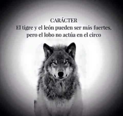 Entre tigres y leones, escojo ser lobo