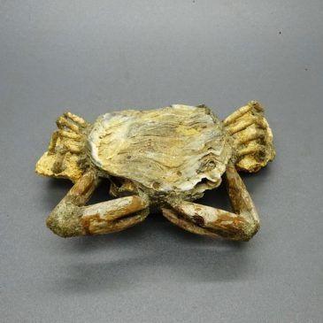 Pusaka Fosil Kepiting Usia Ribuan Tahun Silam