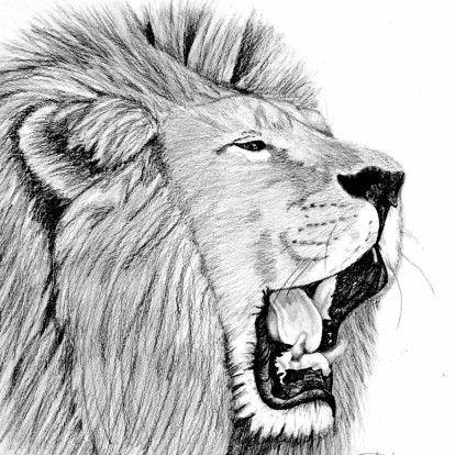 Dierenkaart met brullende leeuw, verkrijgbaar bij #kaartje2go voor €1,79