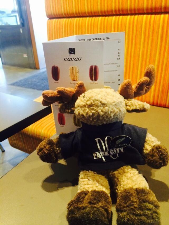 Moose having a Mocha at St Kilda, Melbourne
