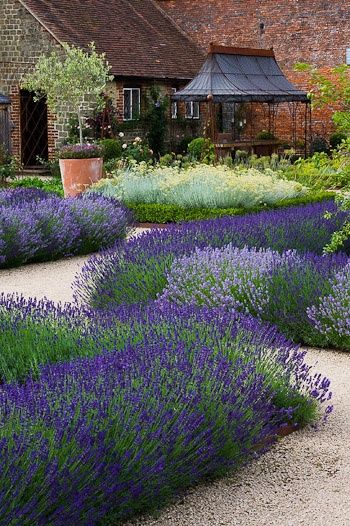 Lovely lavender... Beautiful borders...