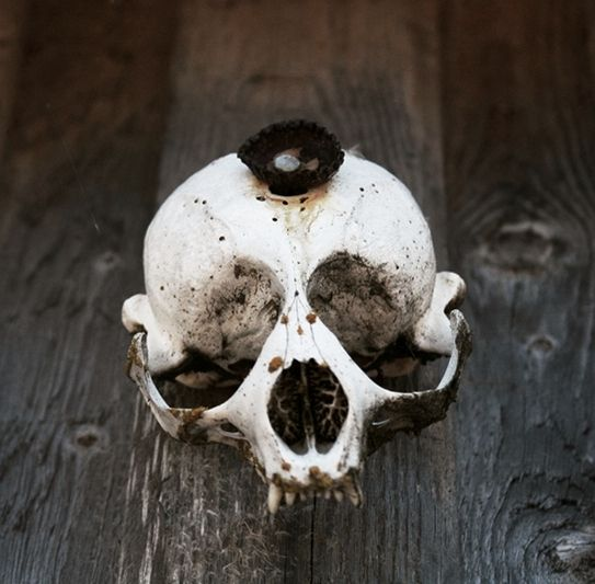 A skull of seal.