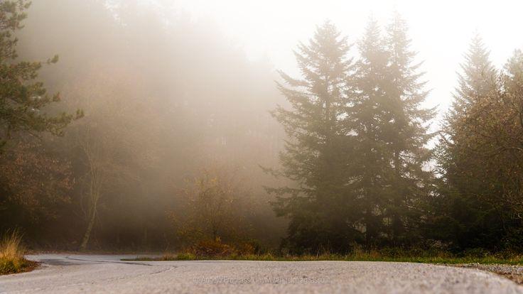 A road in fog - A road in fog in tuscany