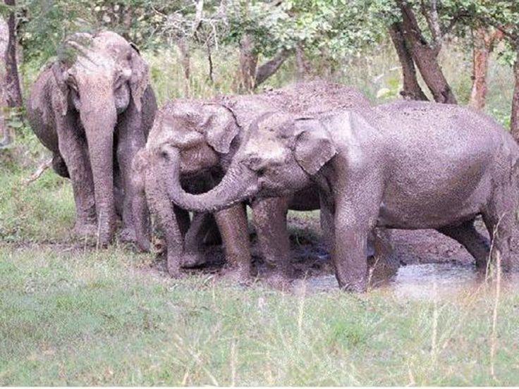 Sanjay National Park in Madhya Pradesh, India