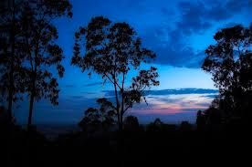 gum trees at sunset - Google Search