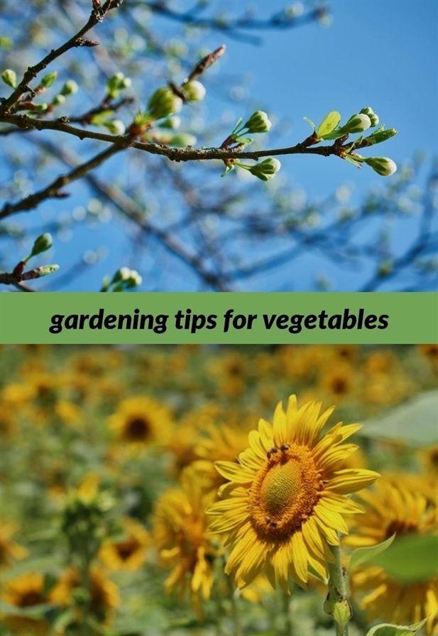 Pin On Gardening For Beginners Vegetables