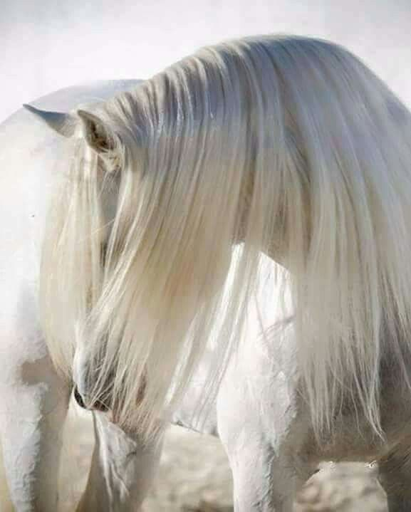 Beautiful mane and forelock.