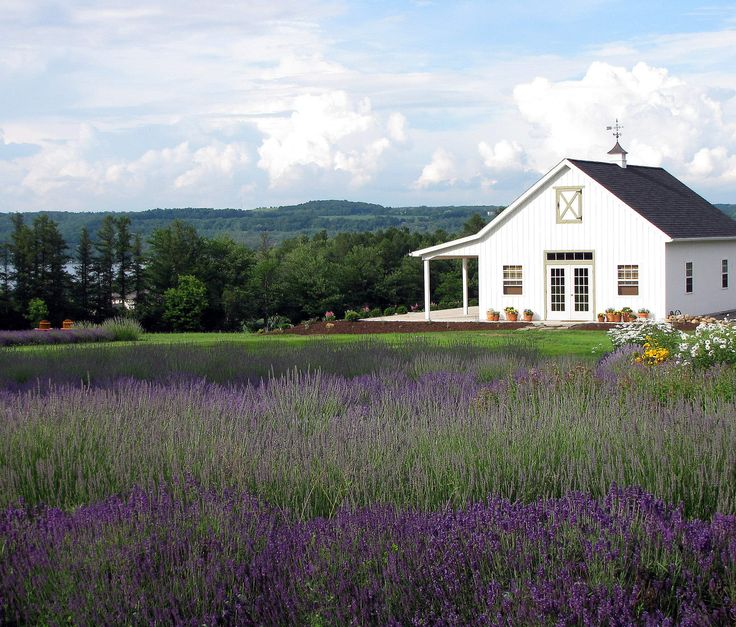 Lockwood Lavender Farm Skaneateles -  On a hillside overlooking Skaneateles Lake (pronounced skinny-atlas), is the 120-acre Lockwood Lavender Farm and New York's own piece of Provence.