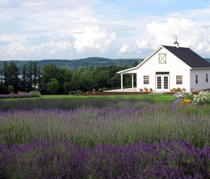 Lockwood Lavender Farm Skaneateles -  On a hillside overlooking Skaneateles Lake (pronounced skinny-atlas), is the 120-acre Lockwood Lavender Farm and New York's own piece of Provence.