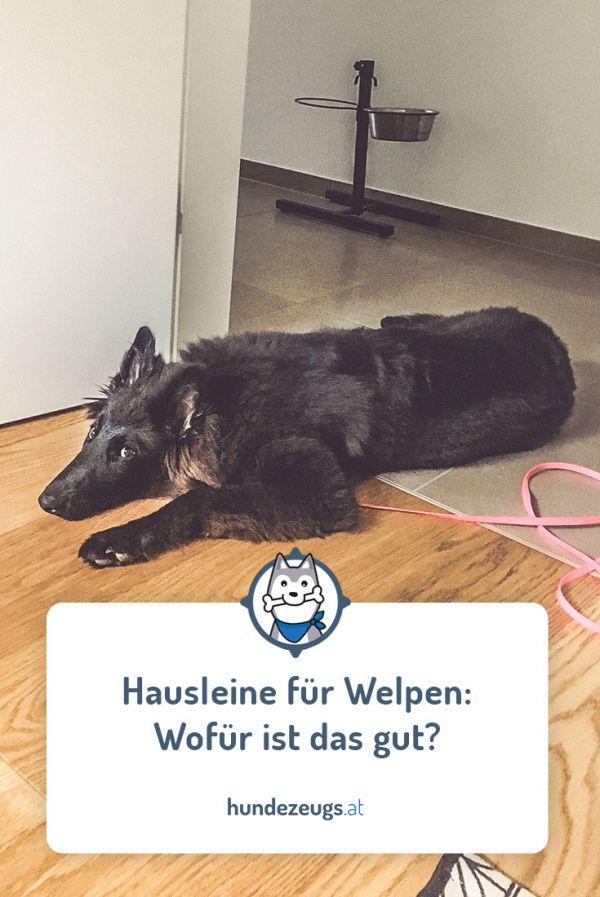 Hausleine Fur Welpen Wofur Ist Das Gut Trainingstipps Von Hundezeugs At Hundeblog Aus Osterreich Welpen Hunde Welpen Erziehung Welpe Stubenrein