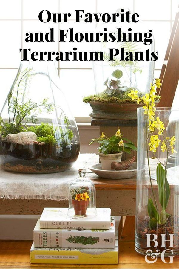 Top Plants For Terrariums House Plant Care Indoor Gardening