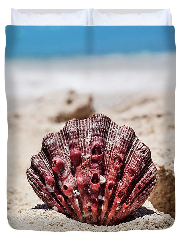 Evgeniya Lystsova Duvet Cover featuring the photograph Sea Shell by Evgeniya Lystsova. Sea shell with sand as background on the seashore of Cancun, Mexico. Home Decor, Tropical, Coastal, Interior Design. Our soft microfiber duvet covers are hand sewn and include a hidden zipper for easy washing and assembly. Your selected image is printed on the top surface with a soft white surface underneath. all duvet covers a machine washable.