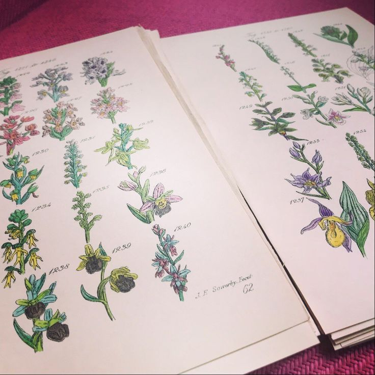 Learn about wild orchids
