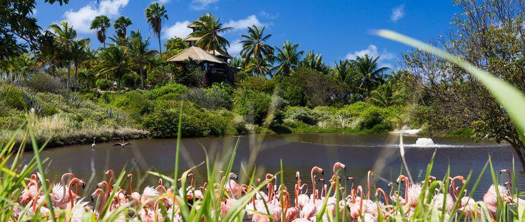 Luxury Holiday Ideas Necker Island Resort Flamingos