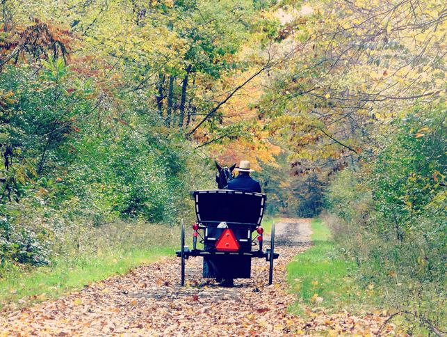 1000 images about things to do on pinterest free things for Amish country things to do