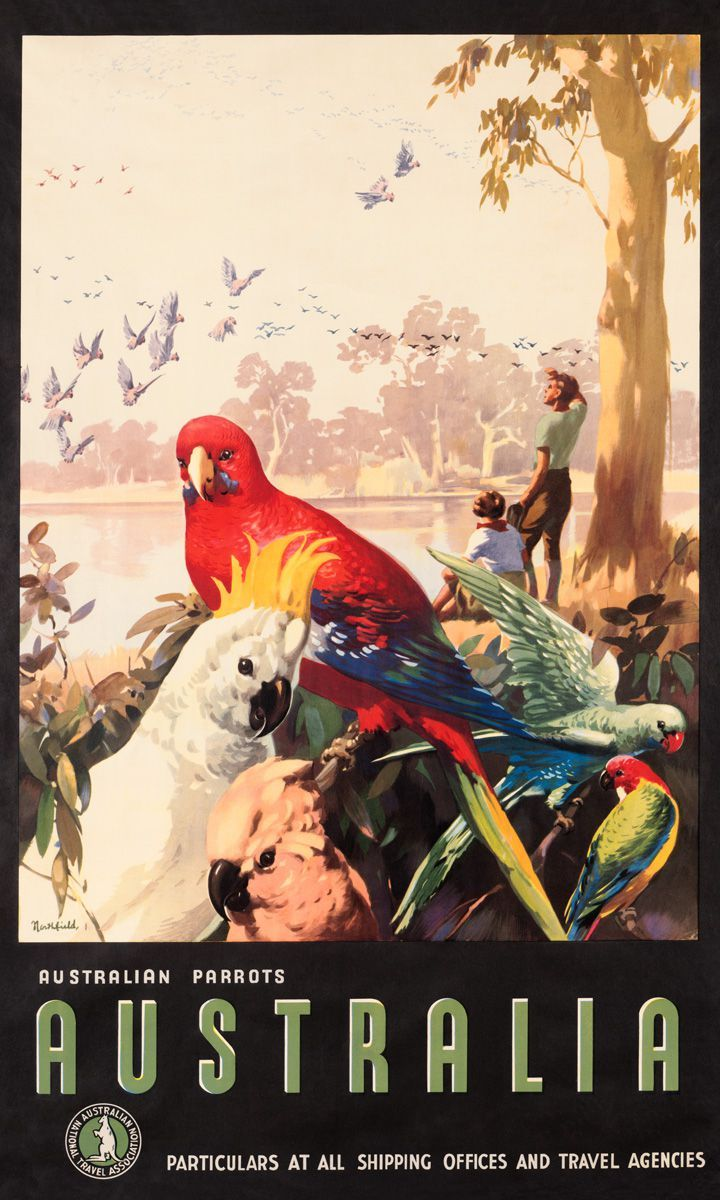 Australian Parrots, Australia, 1930s. Published by the Australian National Travel Association to promote tourism to Australia.