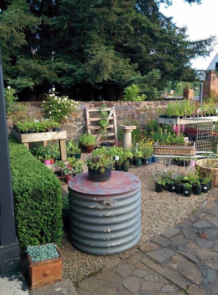 The Courtyard Nursery: https://www.facebook.com/pages/The-Courtyard-Nursery/