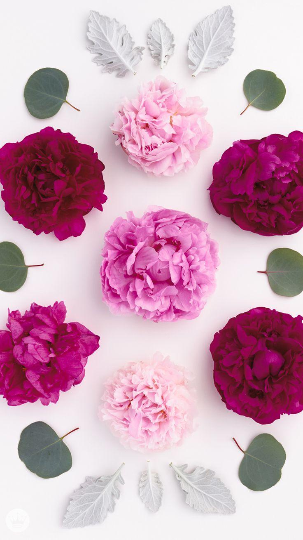 Iphone wallpaper tumblr flower - Iphone Flower Phone Wallpaperflowery