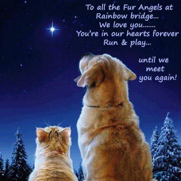 Heaven Can Wait Dogs