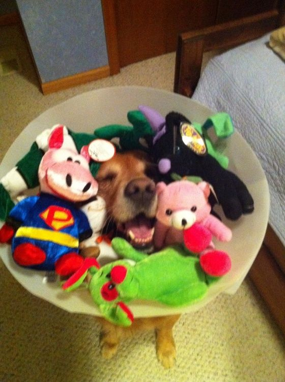 LOL!! awwwwww poor doggie. although, i will admit that i did the same thing with my dog when she wore the 'cone of shame'. sometimes..i'd be mean enough to stuff her toys in there and she couldnt reach them....i'm a mean doggie mom i know... :P