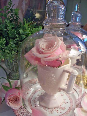 ClochePink Rose