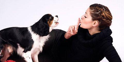 Tips cara melatih anjing agar diam http://www.anjinglovers.com/cara-melatih-anjing-agar-diam/ #anjing #anjinglovers #anjinglover #dog #doglover #doglovers #pet #petlover #animal #caramelatihanjing #caramelatihanjingagardiam #tipsmelatihanjingsupayadiam #hewanpeliharaan