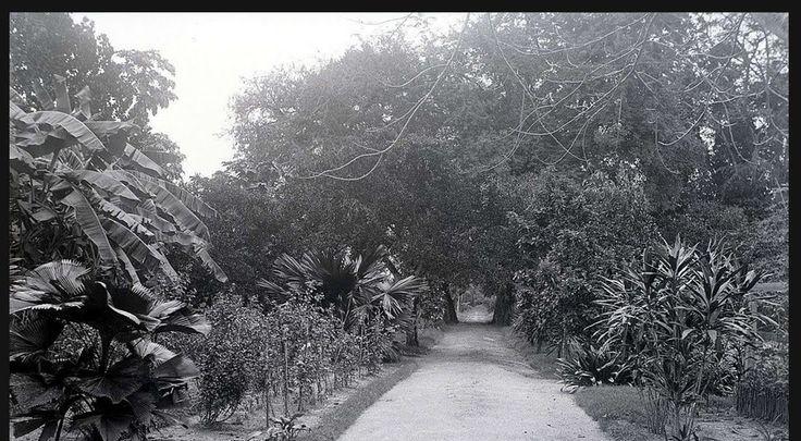 Binnendoor ~ (Paramaribo, Suriname)