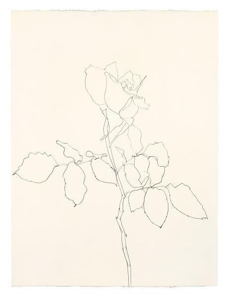 Ellsworth Kelly, Rose, 1983