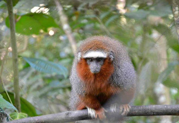 Dyreprojektet langt ude i junglen huser blandt andet aber