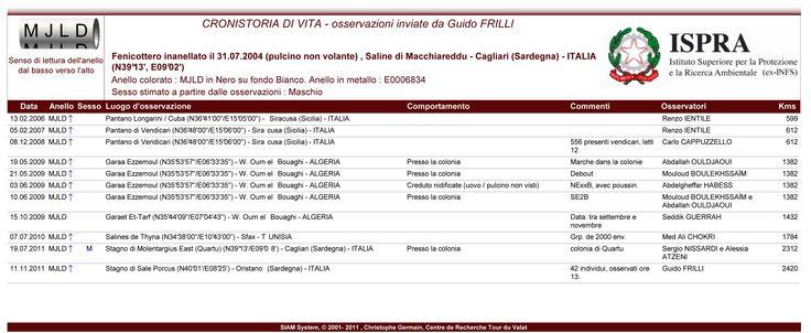 MJLD - cronistoria di vita del fenicottero inanellato il 31/07/2004 nelle Saline di Macchiareddu (Cagliari) e me fotografato l' 11/11/2011 a Sale Porcus in Sardegna 5 anni dopo la nascita, questo uccello ha volato per almeno 2420 Km. #guidofrilli